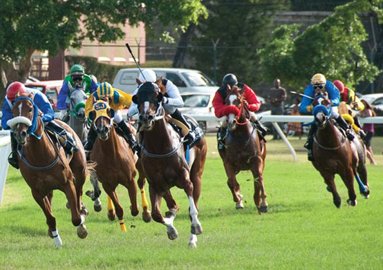 Horse Racing at Sea Breeze Beach House Christ Church, Barbados