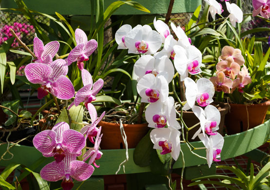 Orchid World at Christ Church, Barbados